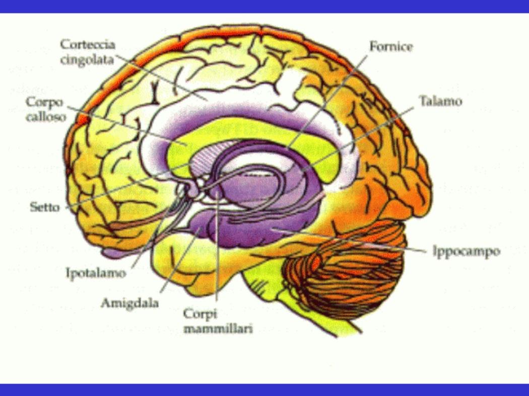 http://www.medicitalia.it/blog/psicologia/5055-ridere-seria.html