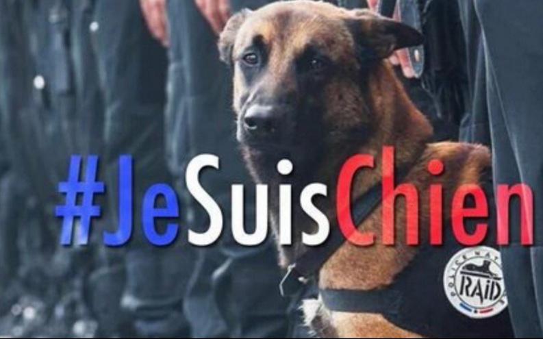 Après la mort de la chienne Diesel à Saint-Denis, la Russie offre un chiot to... - Closermag.fr